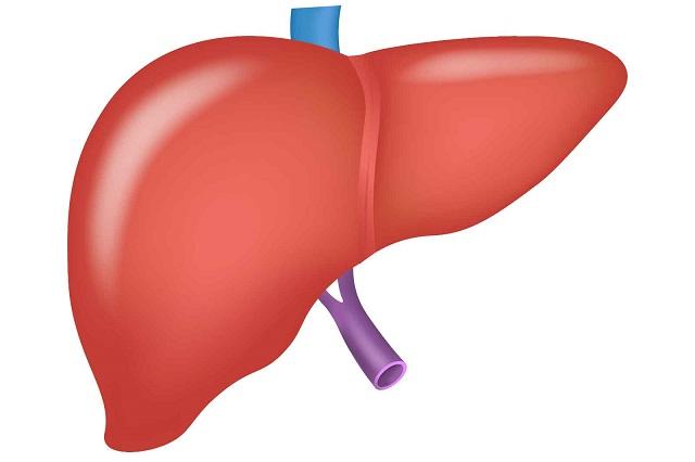 肝臓の働き